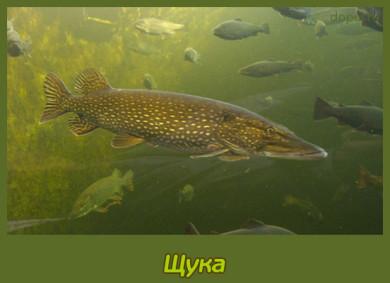 Shhuka