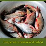 Что делать с пойманной рыбой