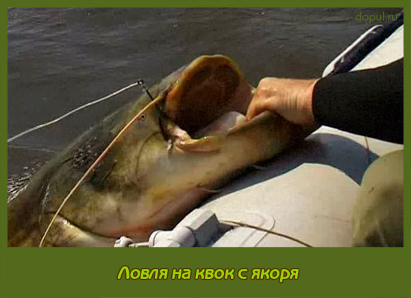 как ловить сома на дону с лодки