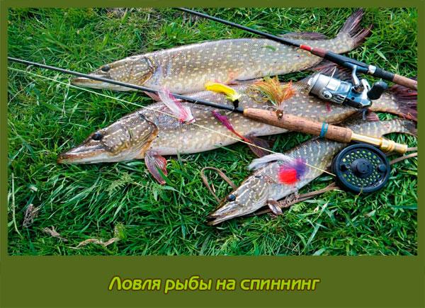 когда ловить рыбу на спиннинг летом