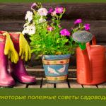 Некоторые полезные советы садоводам