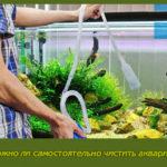 Сложно ли самостоятельно чистить аквариум?
