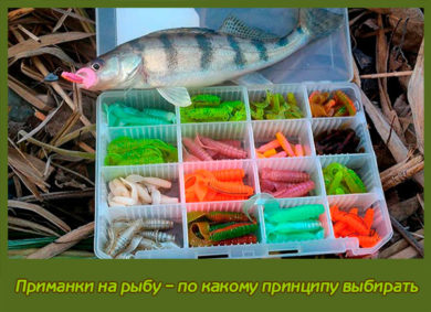Приманки на рыбу