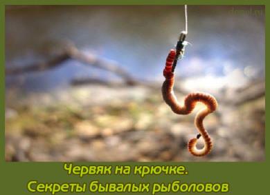 как правильно насаживать червя на крючок